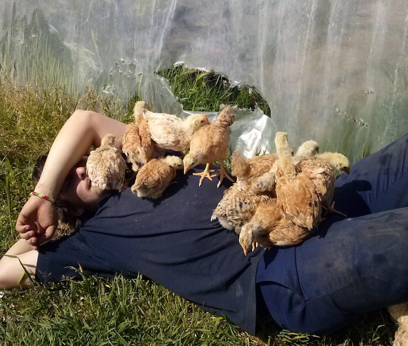 Durmiendo con pollos
