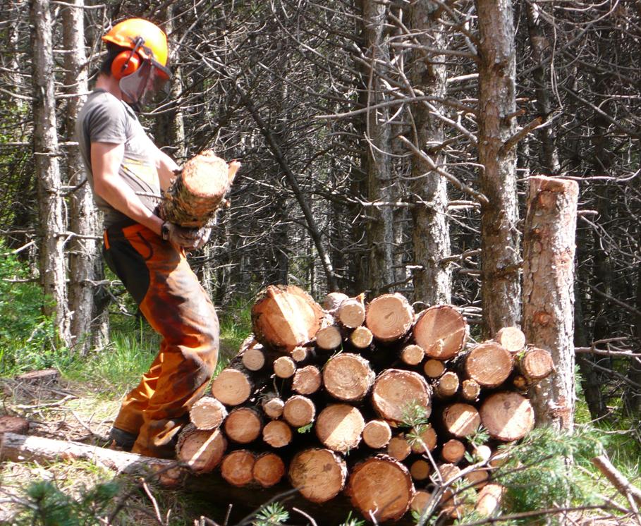 Prácticas forestales en el monte