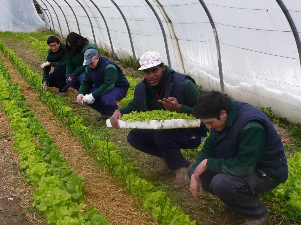 Clase de Mantenimiento de cultivos. Plantando lechugas alumnos del PCPIE