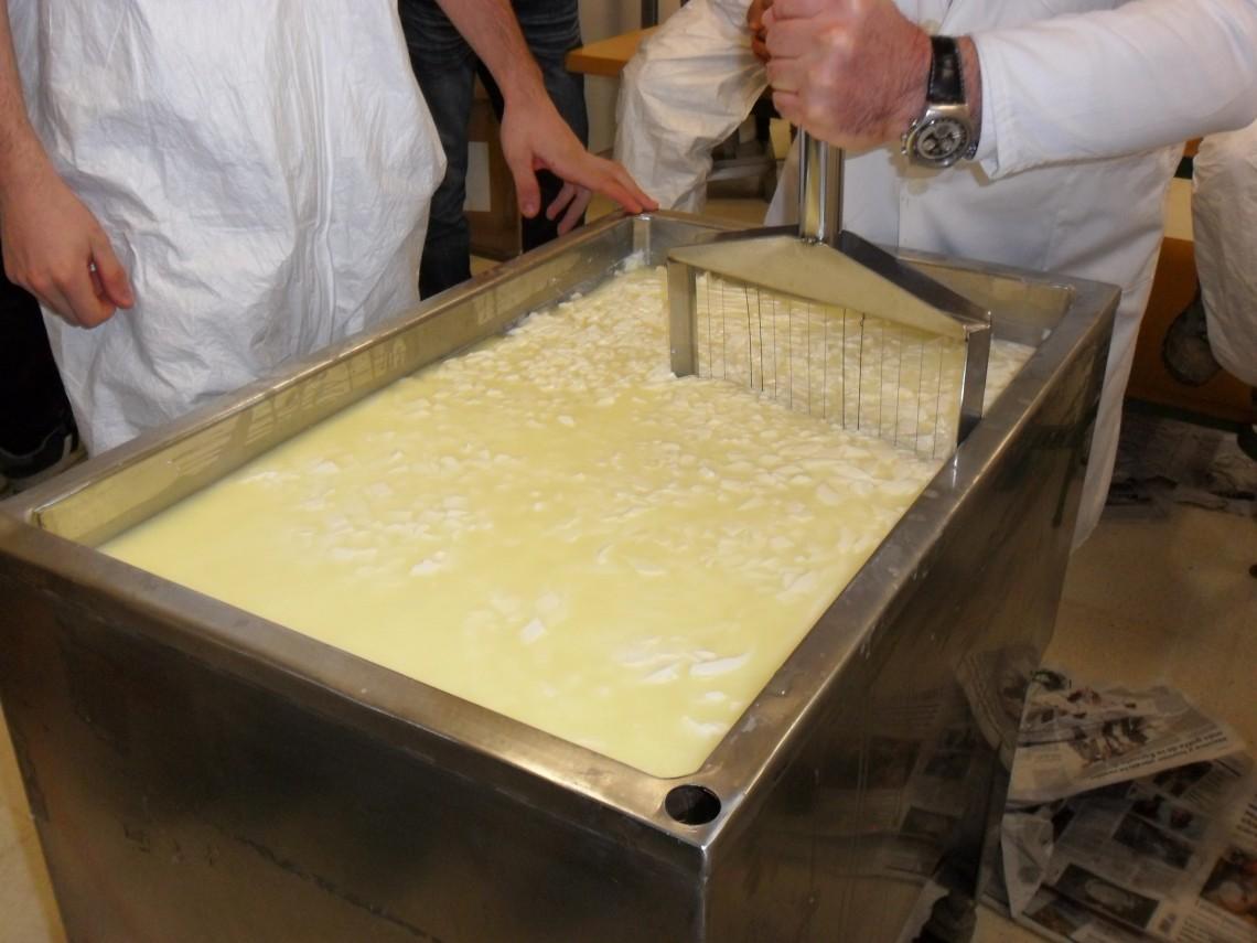 Haciendo queso 11