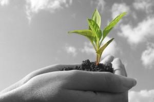 Formación Profesional Básica: Actividades Agropecuarias