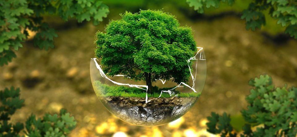 CFG Superior  «Educación y Control Ambiental»