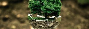 Educacion y control medioambiental