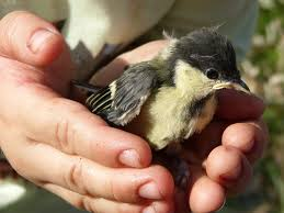 Protección Fauna Salvaje